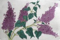 Lilacs  (OUT OF PRINT)