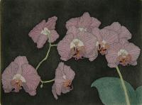 Orchids  (OUT OF PRINT)