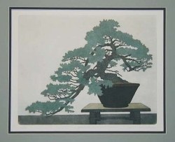Juniper Bonsai (horizontal)